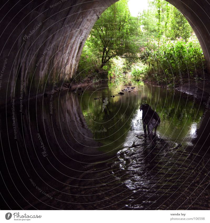 under the bridge Tunnel Brook Dog Light Semicircle Hound Body of water Virgin forest Dark Tree Forest Bridge River Mammal Water German Shorthair End Hunting