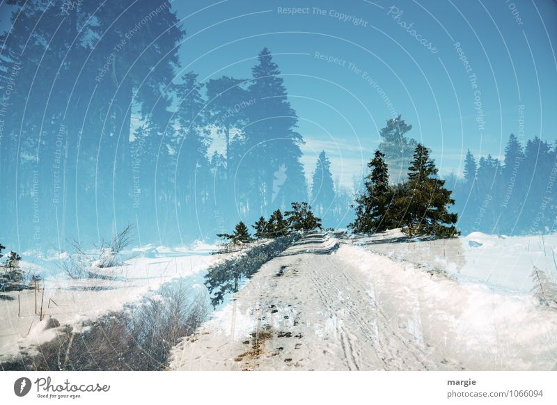 Sky Nature Vacation & Travel Blue White Tree Landscape Winter Forest Snow Lanes & trails Healthy Ice Growth Bushes Fresh