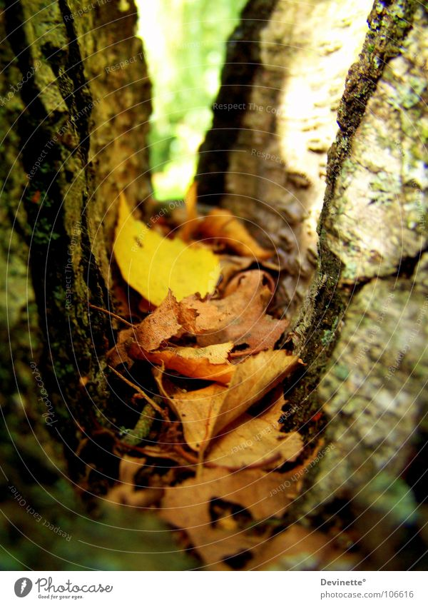 Autumn is colourful ... Tree Birch tree Leaf Brown Yellow Green Multicoloured Beautiful weather