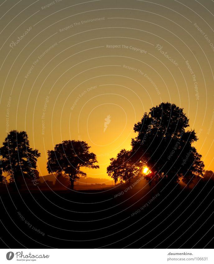Nature Beautiful Old Sky Tree Sun Calm Yellow Forest Dark Autumn Landscape Orange Weather Horizon Circle