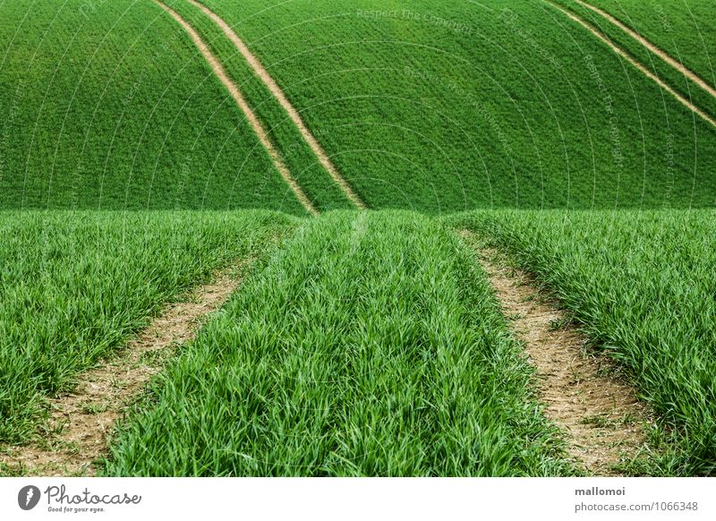Lanes in agricultural fields Agriculture Forestry Environment Nature Landscape Plant Foliage plant Agricultural crop Meadow Field Hill Line Stripe Esthetic