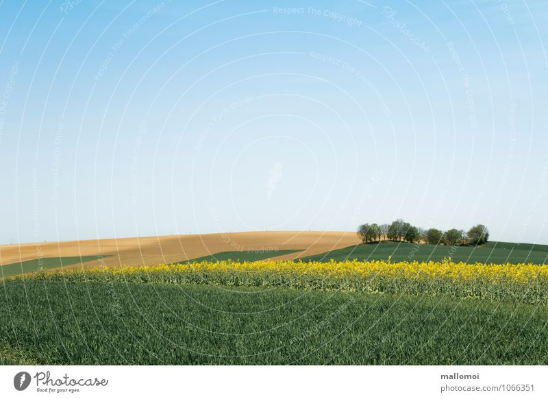 Landscape with graphically arranged fields Agriculture Forestry Environment Nature Plant Earth Sky Cloudless sky Climate Field Hill Esthetic Blue Yellow Green