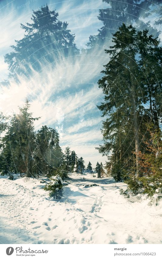 Imaginary winter paths Joy Athletic Vacation & Travel Tourism Trip Winter Snow Winter vacation Nature Landscape Sky Clouds Sun Sunlight Ice Frost Tree Fir tree
