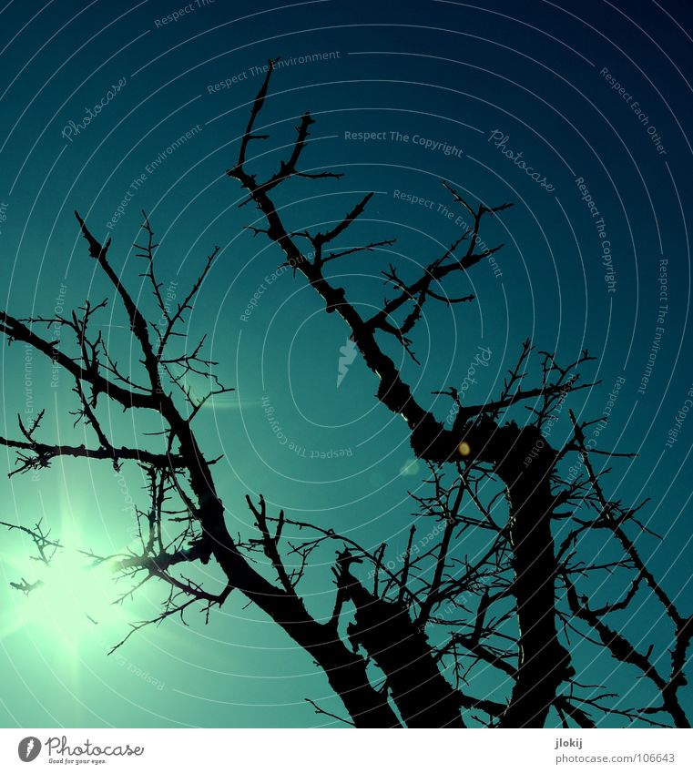 Nature Old Tree Plant Sun Dark Death Life Autumn Transience Branch End Net Spider's web Environmental pollution Diffuse