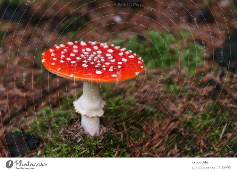 White Plant Death Dangerous Floor covering Threat Umbrella Hat Intoxicant Mushroom Fairy tale Poison Warning colour Amanita mushroom