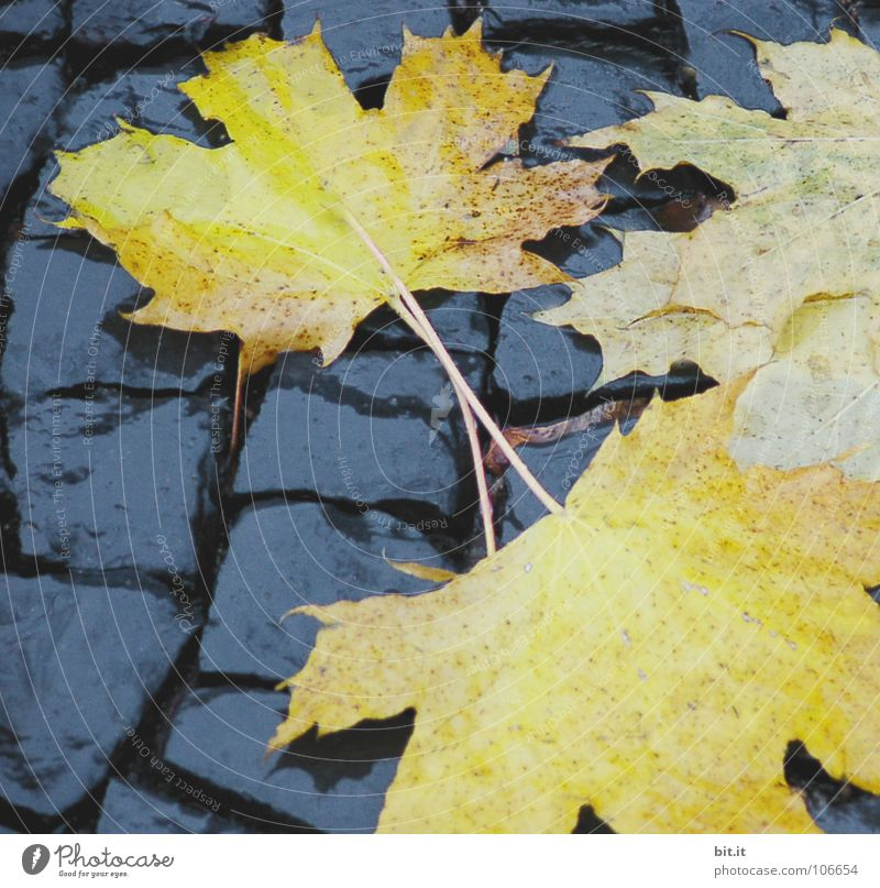 Winter Leaf Far-off places Autumn Cold Snow Lanes & trails Brown Ice Frost Sidewalk Stalk Science & Research Repeating Sunbathing Doomed