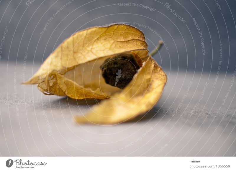 Decay of a pearl Food Fruit Death Physalis Tropical fruits Solanaceae Essen Vegetarian diet Finger food Elegant Healthy Eating Fragrance Environment Nature