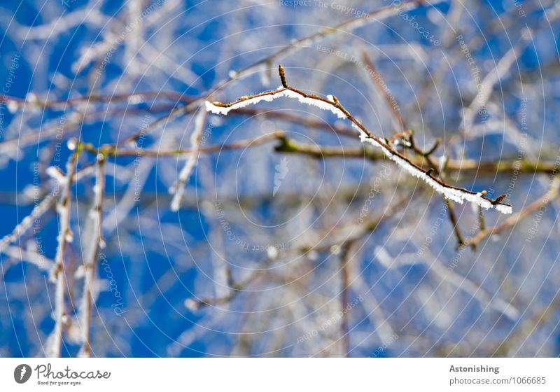 Branches in winter 2 Environment Nature Plant Sky Cloudless sky Winter Climate Weather Ice Frost Snow Tree Freeze Stand Cold Point Blue Black White Fine Thin