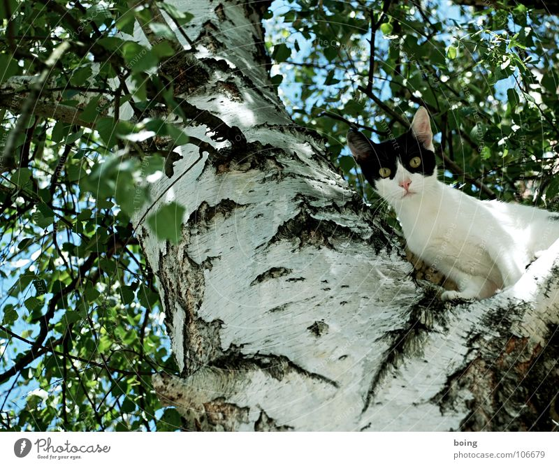 Tree Jump Cat Fear Walking Tall Climbing Pet Mammal Escape Panic Mountaineering Fire department Claw Birch tree Review