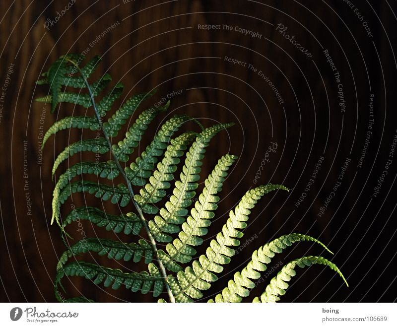 fern Virgin forest Night 7 8 Celestial bodies and the universe Beautiful Pteridopsida Shadow leaf duster
