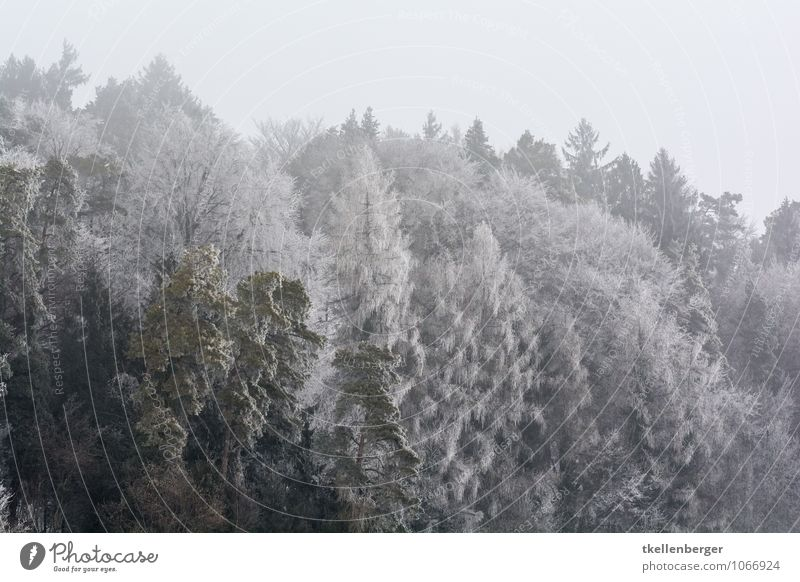 Frost as far as the eyes can see Environment Nature Gray women's field Stählibuck Forest Clearing Edge of the forest Treetop Fir tree Winter Snowfall
