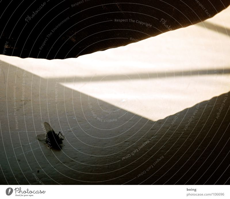 Sun Calm Dark Death Fly Wing Concert Email Drape Curtain Go under Celestial bodies and the universe Window board