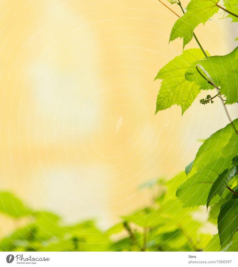 Nature Plant Green Summer Leaf Orange Downtown Vine leaf