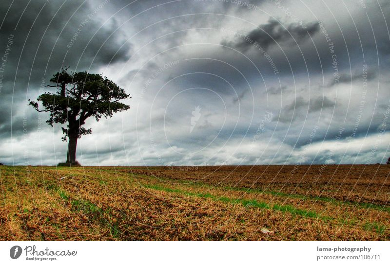 Lonesome Tree Grain Agriculture Forestry Nature Sky Storm clouds Autumn Bad weather Wind Gale Rain Thunder and lightning Field Creepy Cold Wet Moody Loneliness