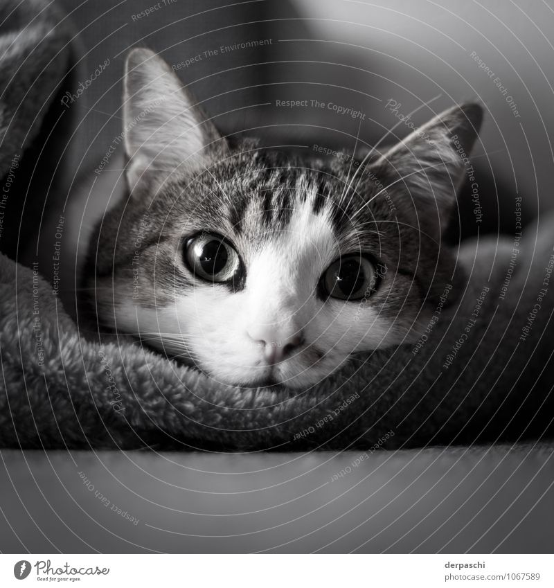 The Rüdiger Flat (apartment) Animal Pet Cat Animal face 1 Lie Black White Calm Indifferent Relaxation Eyes Black & white photo Interior shot Deserted