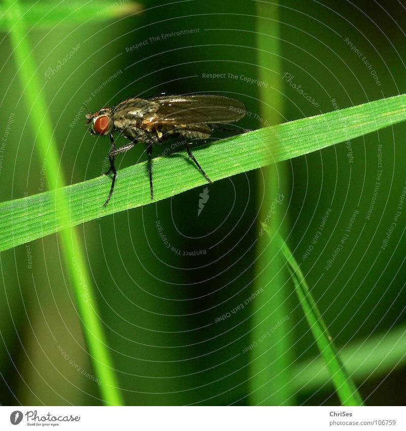 Green Plant Summer Animal Grass Fear Fly Insect Disgust Panic Northern Forest Dipterous