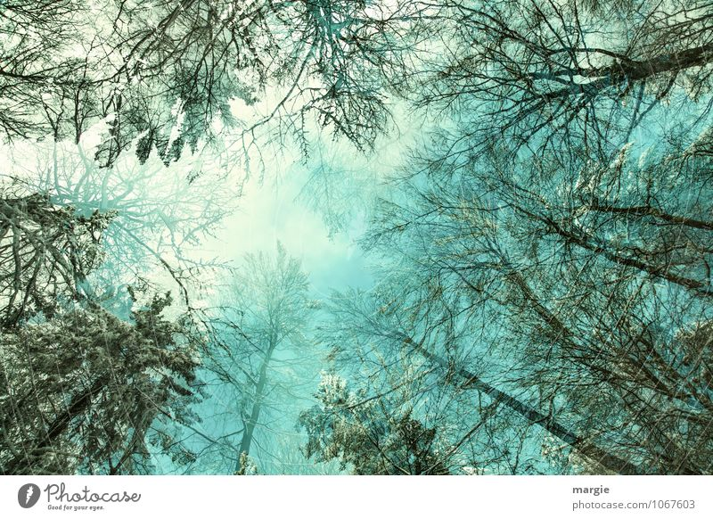 View into the tree tops Healthy Harmonious Well-being Relaxation Calm Meditation Winter Snow Winter vacation Nature Air Sky Climate Climate change