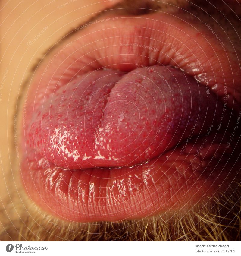 Red Nutrition Warmth Round Lips Physics Wrinkles Point Damp Facial hair Brash Furrow Tongue Senses Sense of taste Organ