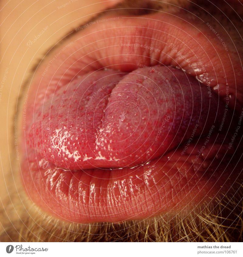 tongue Nutrition Organ Senses Sense of taste Red Lips Physics Damp Facial hair Whiskers Round Macro (Extreme close-up) Close-up Tongue Point Wrinkles Furrow