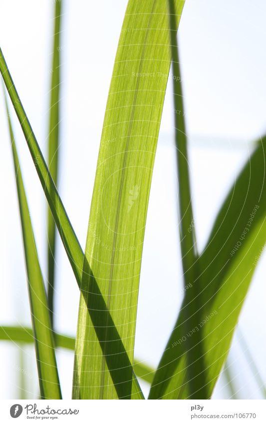 luminescent grass Blade of grass Glasnost Slide Green Light Summer Garden Park Transparent fluoroscopy Lamp Bright