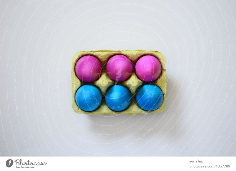 six-pack Food Egg Breakfast Feasts & Celebrations Easter Blue Pink Easter egg 6 Eggs cardboard Colour photo Interior shot Copy Space left Copy Space right