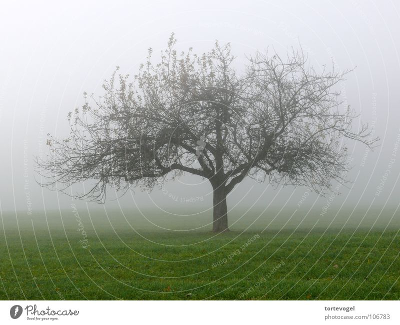 Tree in the fog Fog Damp Cold Beautiful Nature Grief Autumn Wet Meadow Green Fresh Winter Switzerland Landscape Old Sadness