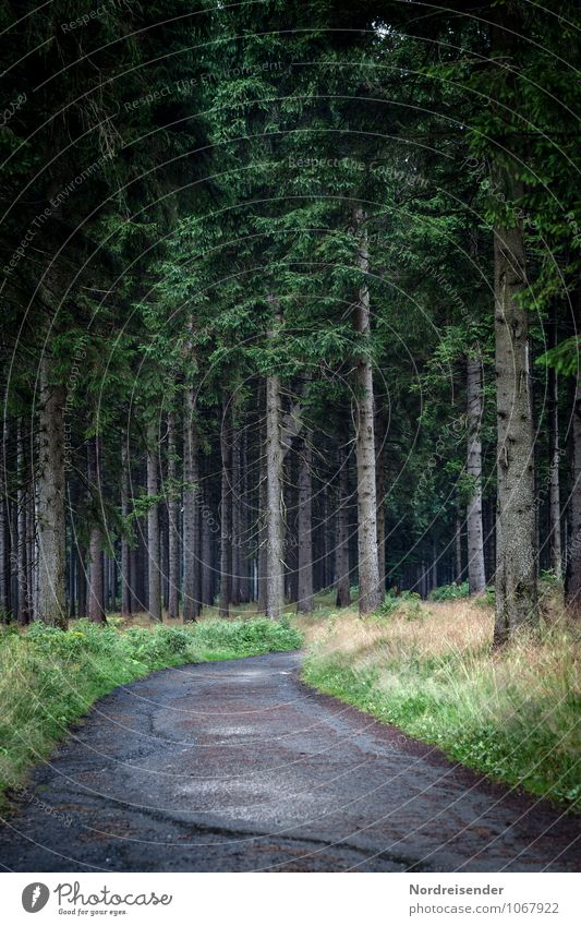 Bleak forest Senses Hiking Agriculture Forestry Nature Landscape Plant Tree Grass Wild plant Lanes & trails Threat Dark Watchfulness Mistrust Fear Loneliness
