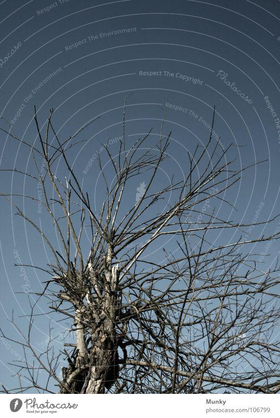 Old Sky White Tree Blue Plant Gray Bushes Character Hard Wisdom Vail