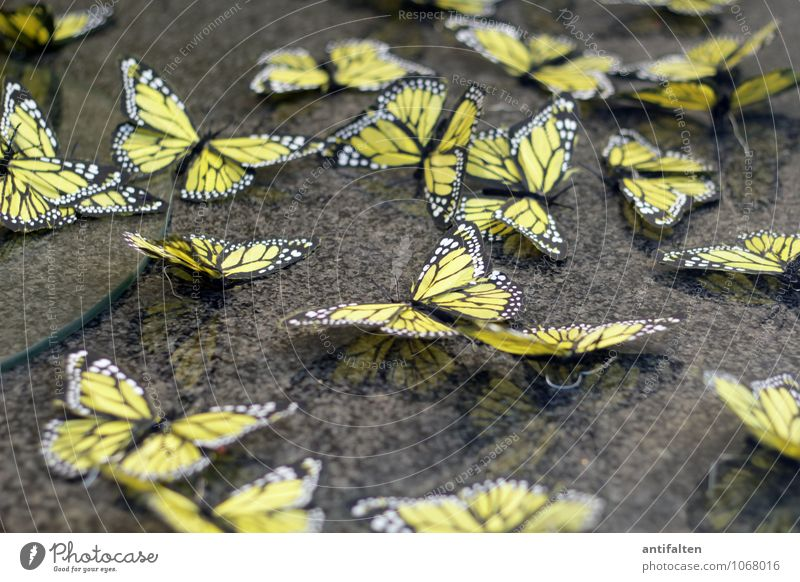 Fresh butterflies Lifestyle Design Leisure and hobbies Handcrafts Easter Profession Interior designer Shop window Window dresser Spring Butterfly Wing