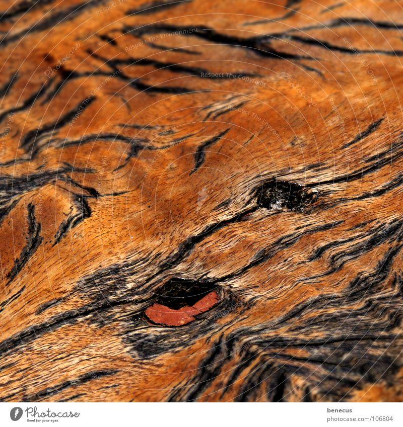 Old Wood Brown Watercraft Branch Craft (trade) Furrow Flat Wood grain Plank Wood flour Auburn Knothole Tiger skin pattern Overlay Log