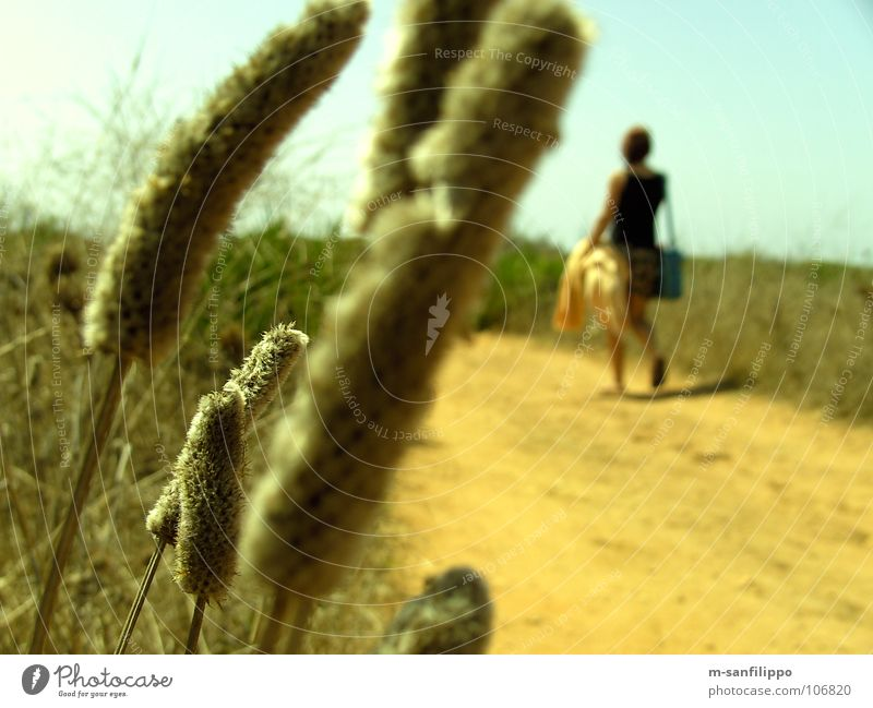 Woman Nature Plant Summer Joy Vacation & Travel Animal Yellow Lanes & trails Sand Field Hiking Weather Bushes Ground To go for a walk