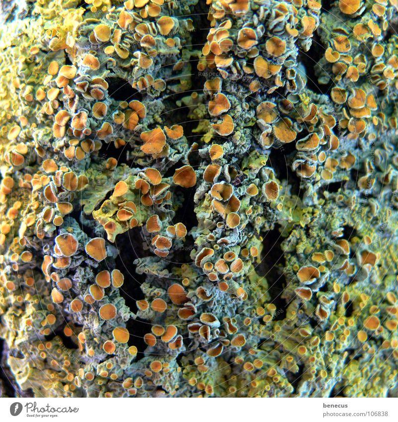 Tree Plant Life Orange Open Hollow Mushroom Botany Opening Verdant Reef Bond Coral Spore Reticular Seed