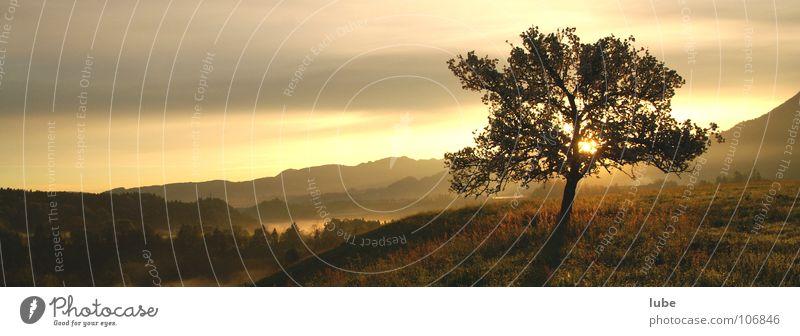 Tree Sun Moody Weather Grief Distress Panorama (Format) Dawn Wake up Arise Sunlight Mood lighting