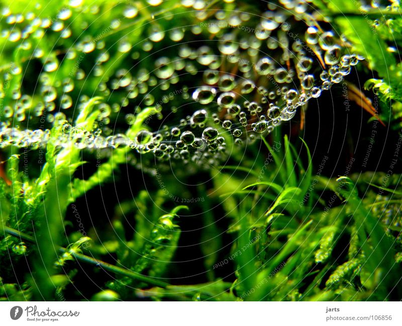 dripping sky Drops of water Spider's web Green Grass Fresh Damp Autumn Macro (Extreme close-up) Close-up Rain Rope Net Nature jarts