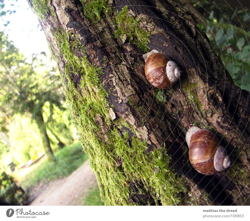 RACE Animal Mucus House (Residential Structure) Snail shell Trail of mucus Tracks Crawl Gain favor Tree Tree bark Sunlight Blur Insect Tree trunk Nature