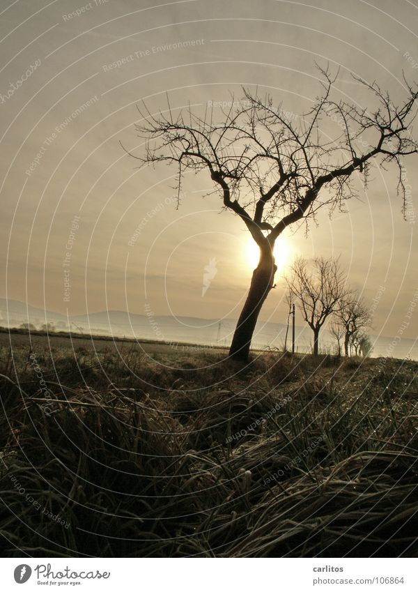 Tree Sun Winter Weather Mysterious Hide Colorless Apocalypse Water ditch Apocalyptic sentiment Row of trees