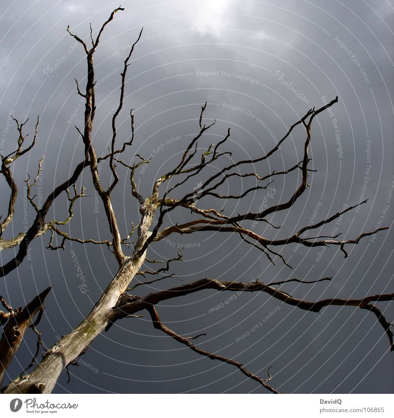 Sky Old Tree Clouds Dark Death Life Autumn Wood Gray Sadness Transience Grief Branch End Dry