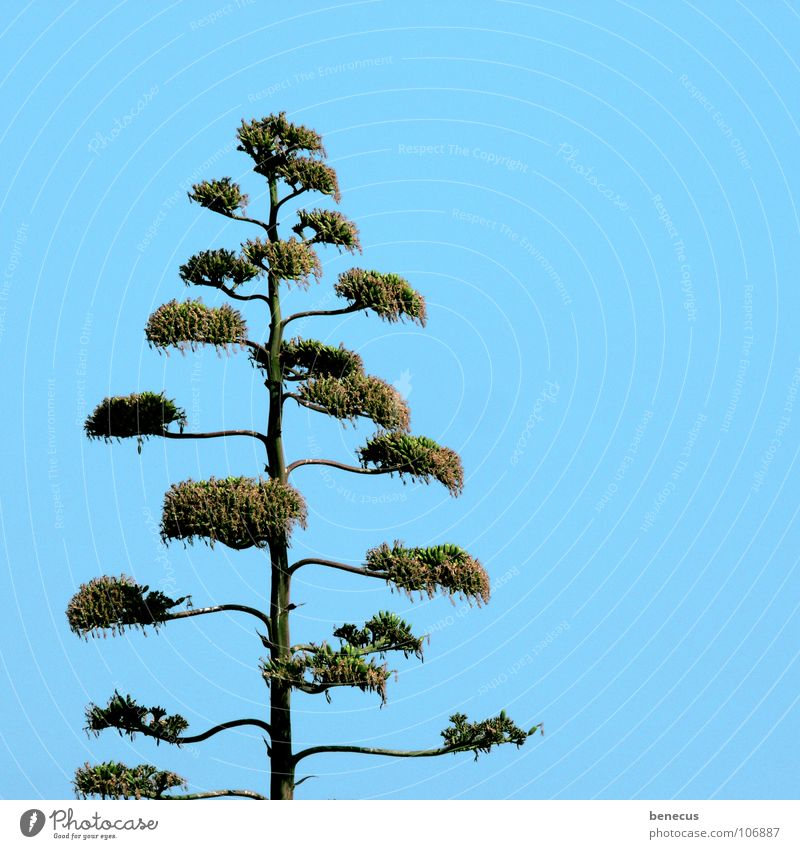 Green Plant Loneliness Blossom Line Power Force Growth Desert Blossoming Turquoise Dry Twig Vertical Drought Desert