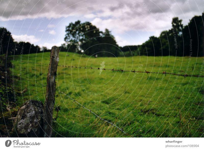 Staket och landskap Sösdala Extensive Sweden Green Meadow Tree Clouds Dividing line Border Fence Barbed wire fence Exterior shot heglings bosarpsjön Open