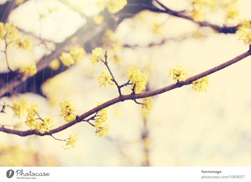 Nature Beautiful Summer Sun Tree Environment Yellow Blossom Spring Brown Bright Gold Happiness Esthetic To enjoy Branch