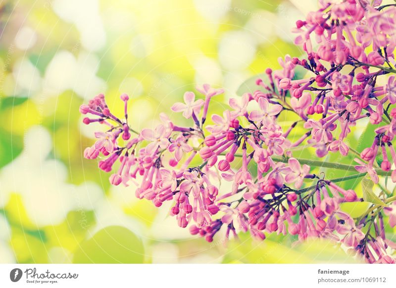 ornament Environment Nature Sun Sunlight Spring Summer Beautiful weather Tree Leaf Blossom Esthetic Spring fever Blossoming Right Curved Pink Violet Yellow