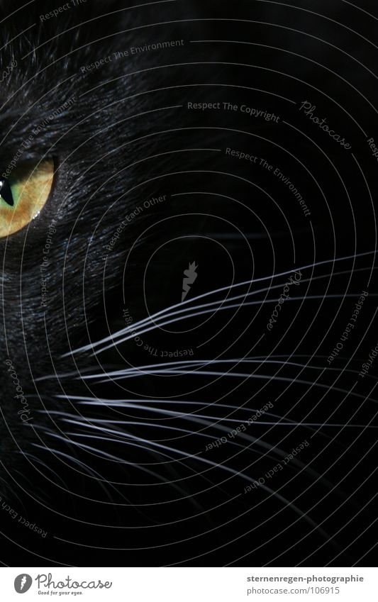 mrrr. Cat Black Panther Threat Attack Animal portrait Mammal Black cat green eyes Black & white photo Cat eyes Domestic cat Eyes