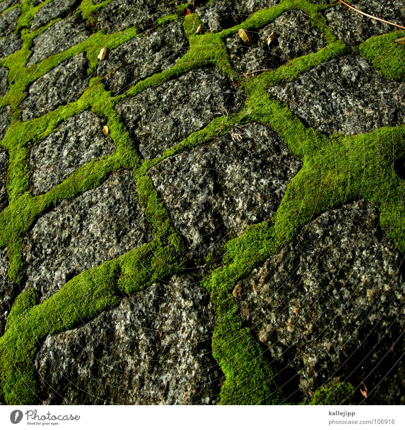 pixel green Granite Green Gray Growth Maturing time Square Cuboid Moss Overgrown Damp microcosm Cobblestones Stone Street Lanes & trails proliferate kallejipp
