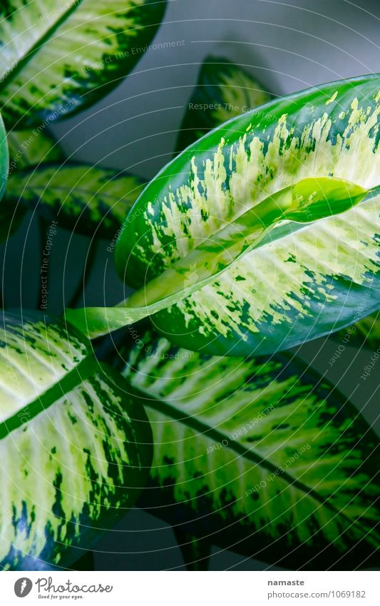 plant2 Plant Flower Leaf Foliage plant Pot plant Multicoloured Green Protection Safety (feeling of) Desire Colour photo Subdued colour Interior shot Dawn