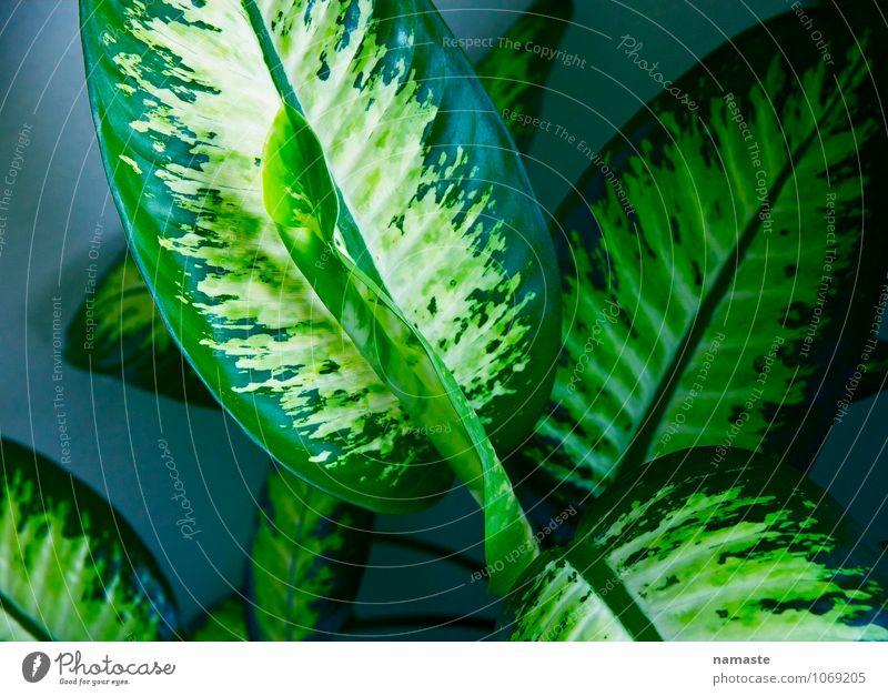 schedules Plant Leaf Foliage plant Blue Green Happy Colour photo Subdued colour Interior shot Deserted Copy Space left Copy Space right