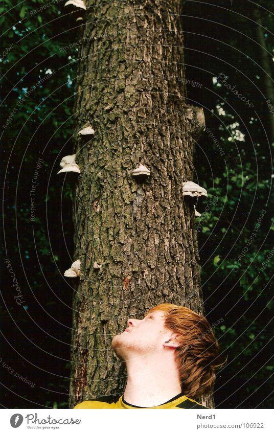 Man Nature Green Tree Forest Head Observe Curiosity Tree trunk 18 - 30 years Mushroom Tree bark Young man Face of a man Tree fungus Man`s head