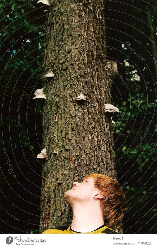Man Nature Green Tree Forest Head Observe Curiosity Tree trunk 18 - 30 years Mushroom Tree bark Young man Face of a man Tree fungus Man`s head