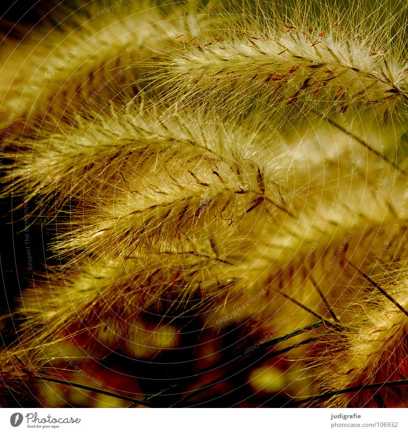 Green Beautiful Plant Colour Yellow Meadow Grass Glittering Soft Delicate Pasture Stalk Blade of grass Smooth Flexible Pollen
