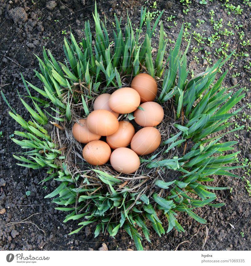 Easter egg hunt in the garden Egg organic eggs Organic produce Garden Earth Plant Lily Nest Easter egg nest Bird's eggs Healthy naturally Brown Green Hide