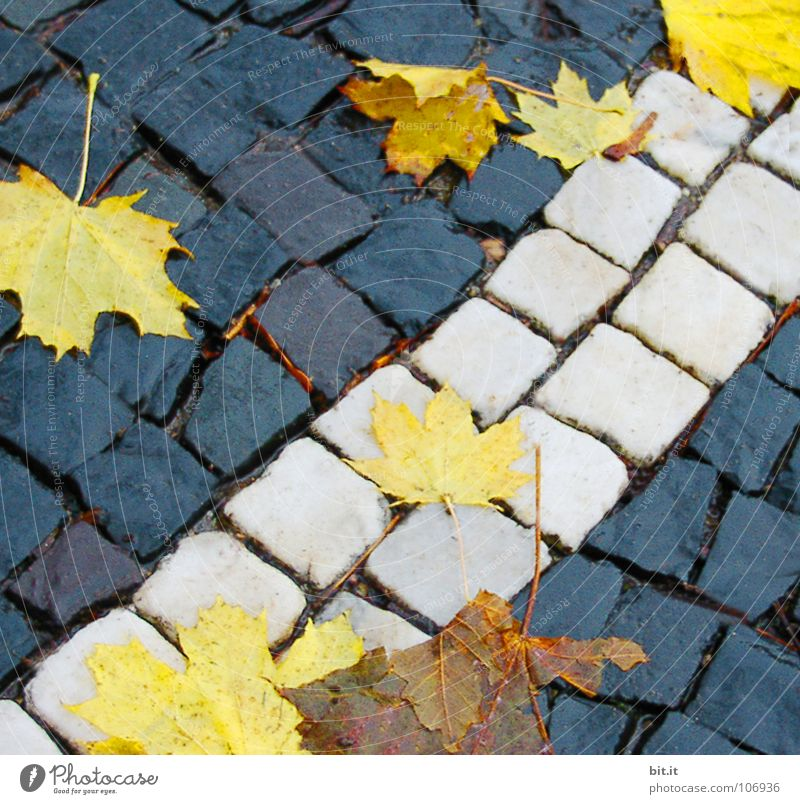 Winter Leaf Far-off places Autumn Cold Snow Lanes & trails Stone Brown Ice Frost Sidewalk Stalk Square Traffic infrastructure Cobblestones